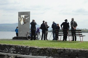 Eagle watching at Mountshannon Harbour